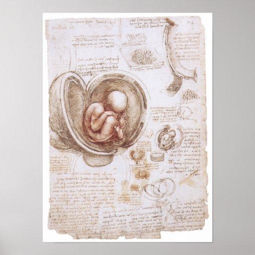 Niño en la matriz, Leonardo da Vinci Poster