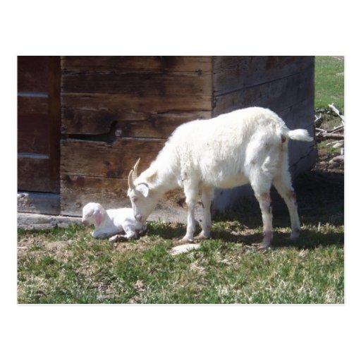 Niño y niñera recién nacidos postal