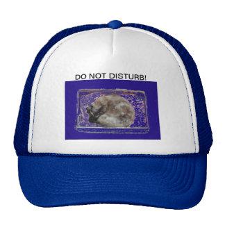 No perturbe la gorra de béisbol de la foto del gat