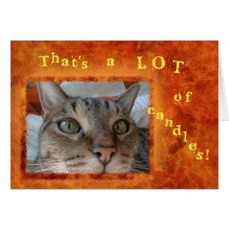 Nómada cumpleaños de la opinión del gato el feliz tarjeta de felicitación
