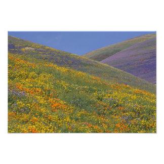 Norteamérica, los E.E.U.U., California, Los Ángele Impresiones Fotograficas