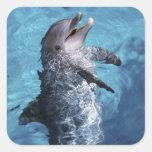 Norteamérica, los E.E.U.U., Hawaii. Delfín 2 Calcomanía Cuadradase