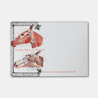 """Notas Post-it® """"Anatomía veterinaria de una cabeza de caballo """""""