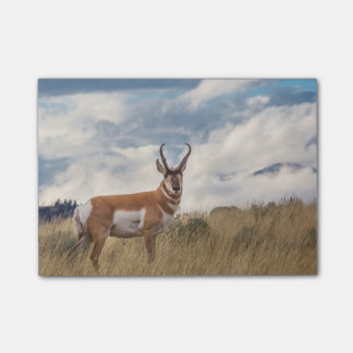 Notas Post-it® Atontamiento Pronghorn