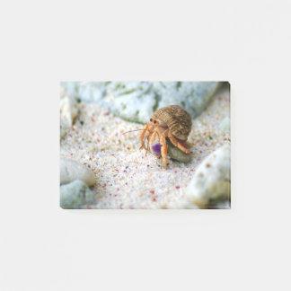 Notas Post-it® Cangrejo de la arena, Curaçao, islas caribeñas,