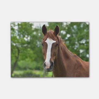 Notas Post-it® Cara del caballo con la marca