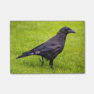 Notas Post-it® Cuervo negro