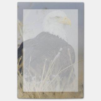 Notas Post-it® Eagle calvo en la tierra