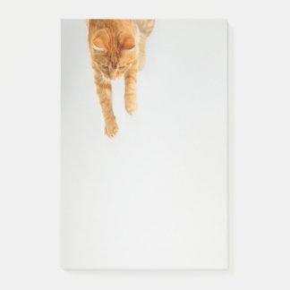 Notas Post-it® El Poste-it® anaranjado del gato de Tabby observa