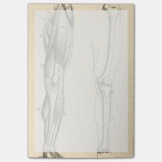 Notas Post-it® Músculos de la anatomía el |   del vintage y
