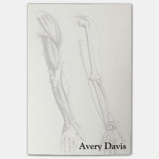 Notas Post-it® Músculos de la anatomía el | del vintage y huesos