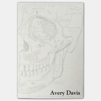 Notas Post-it® Región de Anterolateral de la anatomía del vintage