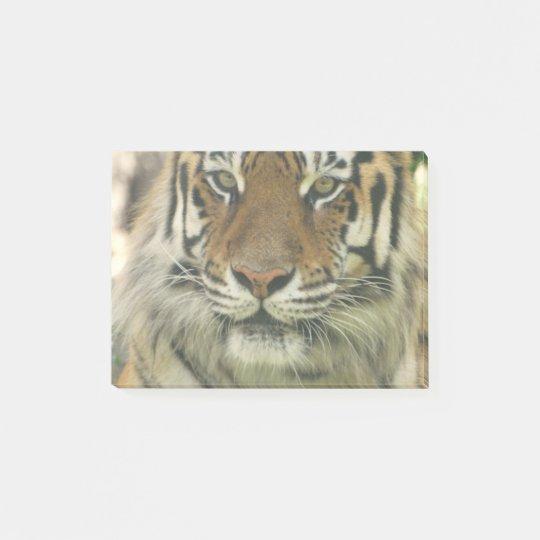 Notas Post-it® Tigre de Sumatran