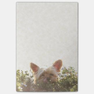 Notas Post-it® Yorkshire Terrier que pone en Sun que lame los