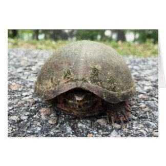 notecard de la tortuga del canal tarjeta pequeña