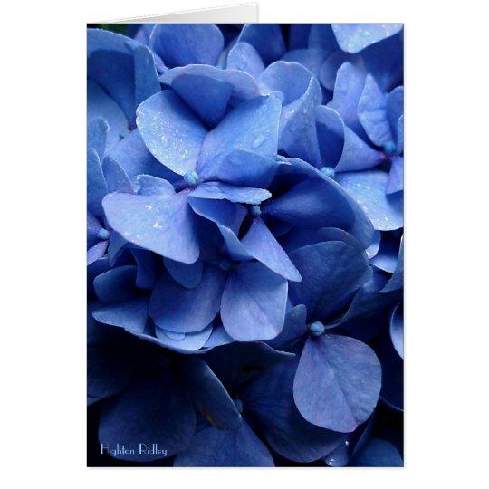 Notelet en blanco/tarjeta de los Hydrangeas azules Tarjeta Pequeña