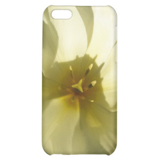 Novia blanca del tulipán