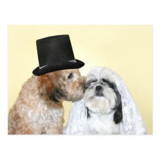 Novia y novio caninos postal
