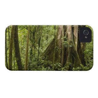 Núblese el bosque Bosque de Paz Costa Rica