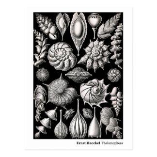 Nueva dirección de Ernst Haeckel Thalamophora II Postal