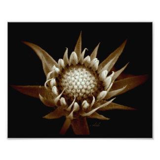 Nueva floración arte fotográfico