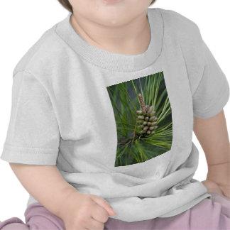Nuevo crecimiento del pino ponderosa camiseta