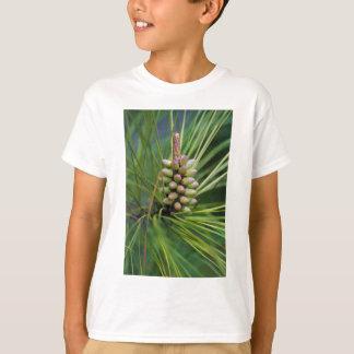 Nuevo crecimiento pintado del pino ponderosa camisas