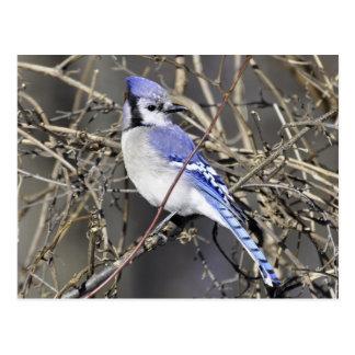 Nunca vio un pájaro más hermoso… postal