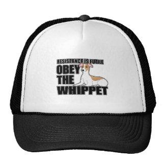 Obedezca el Whippet Gorra