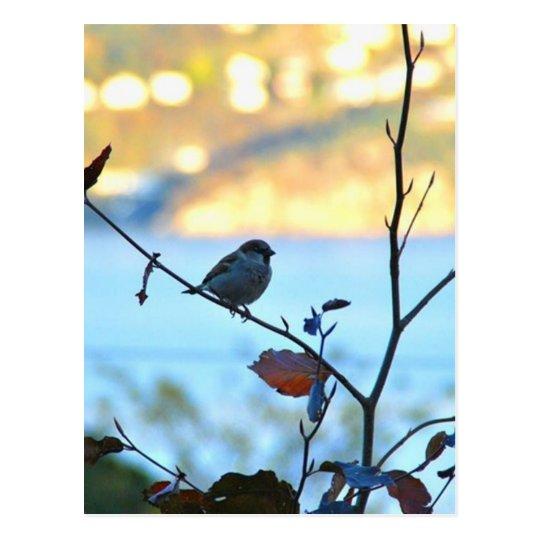Observación de pájaros postal