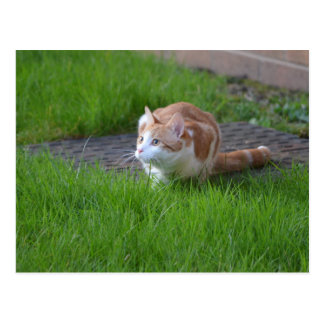 Observación del gato del jengibre postal
