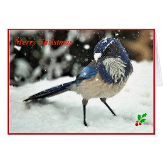 Occidental friegue la tarjeta de Navidad de Jay