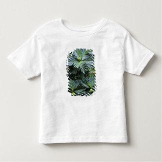 Oceanía, South Pacific, Polinesia francesa, Camisas