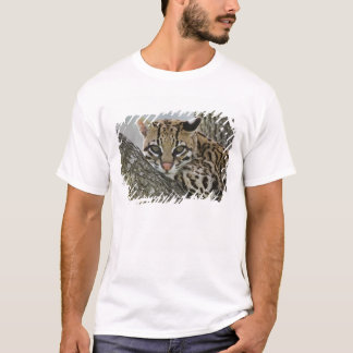 Ocelot, pardalis del Felis, cautivo, hembra que Camiseta