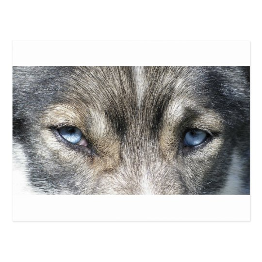 Odins ojo postal
