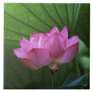 Ohga Lotus, Sankei-en jardín, Yokohama, Japón Azulejo Cuadrado Grande