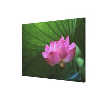 Ohga Lotus, Sankei-en jardín, Yokohama, Japón Impresión De Lienzo