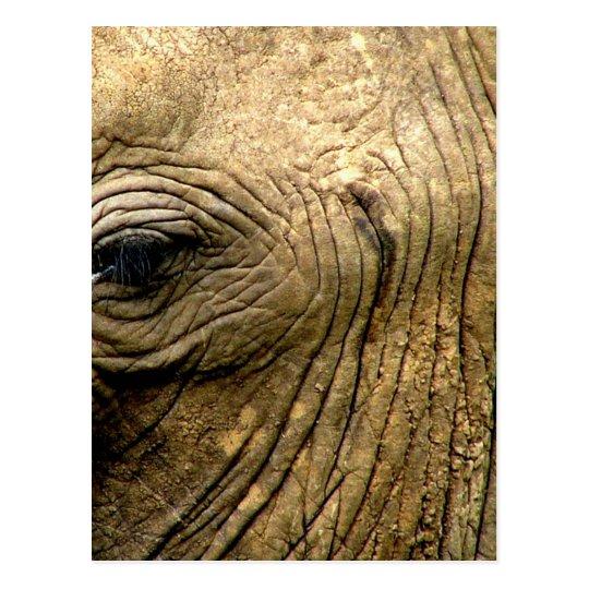 Ojo del elefante postal