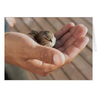 Ojo del pájaro del gorrión en la tarjeta de