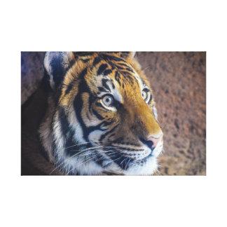 Ojo del tigre lienzo