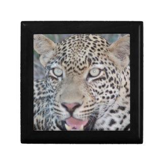 Ojos africanos salvajes del leopardo cajas de recuerdo