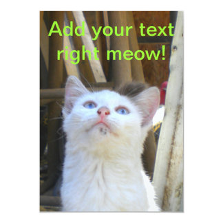 Ojos azules del gato blanco de la granja invitación 12,7 x 17,8 cm