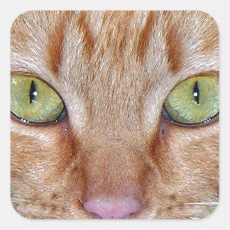 Ojos de gato anaranjados calcomanías cuadradas personalizadas