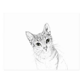 Ojos de gato un dibujo de lápiz postal