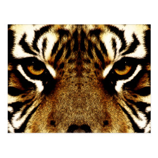 Ojos de un tigre postal