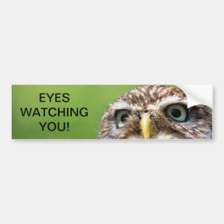 Ojos del búho que miran a la pegatina para el para pegatina para coche