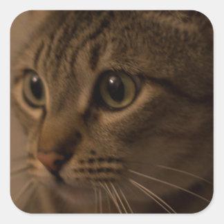 Ojos del cazador pegatina cuadrada