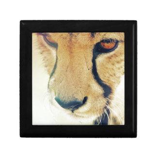 Ojos del guepardo cajas de regalo