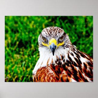 Ojos del halcón -- impresión del arte