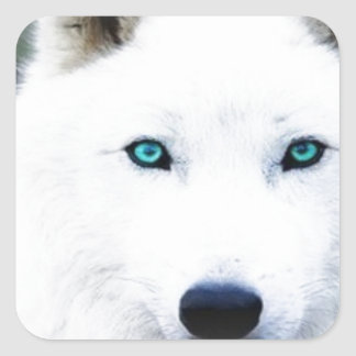 Ojos del lobo pegatina cuadrada